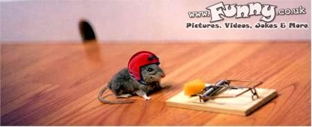 clever mouse trap funny - photo #4